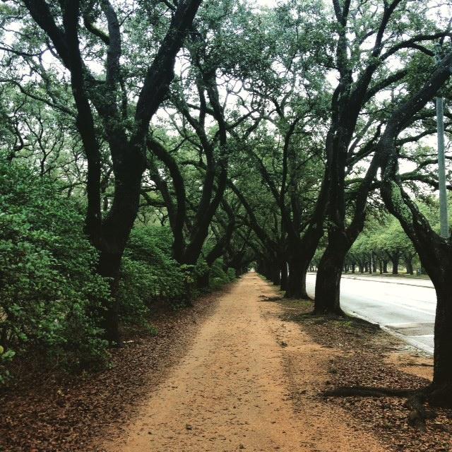 494de6a5dd80 Running the Rice University Trail   Run for Wellness 5K