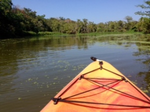 Kayaking the Armand Bayou Houston