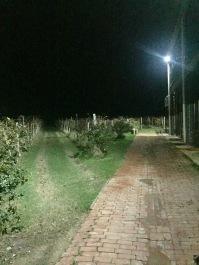 Scary vineyard at dark, pt. 2.