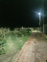 Scary vineyard at dark, pt. 2.