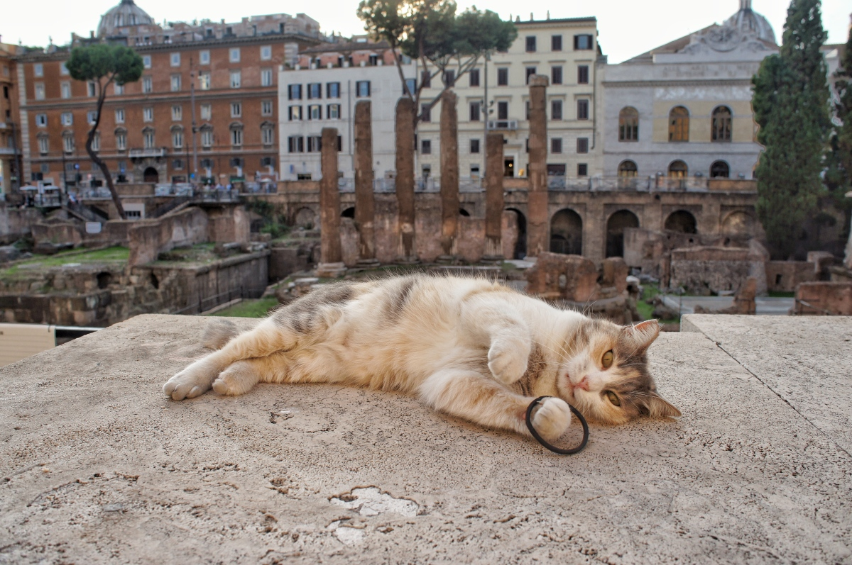 Largo di Torre Argentina-cat colony-2