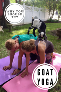 goat yoga classes