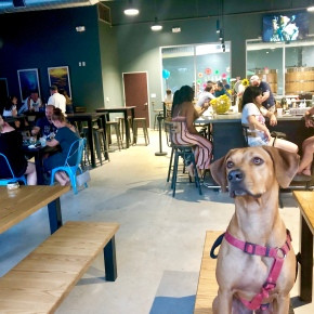 Best Dog-Friendly Places in Houston for EveryOccasion